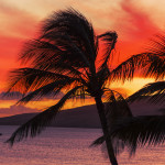 Palm trees and the ocean against a beautiful Maui sunset