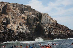 baignade avec les lions de mer au Pérou